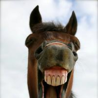 Лысый конь